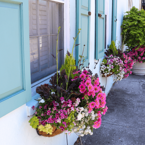 Window boxes are full of flowers in pinks, purples, greens and yellows. THey sit on the windows of a historic house that is a light blue color.